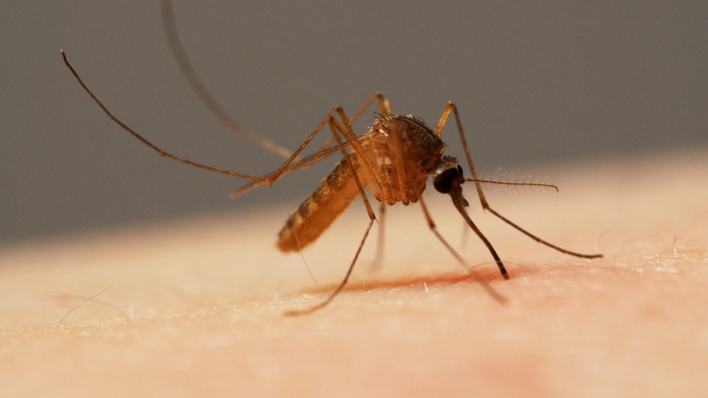 Malaria: first ever malarial vaccine launched in Africa