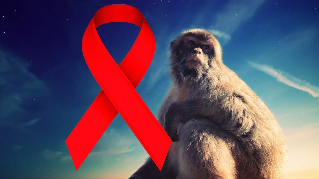 Cure for HIVAIDS Scientists Cure HIV in Monkeys, Human Trials to Start Soon