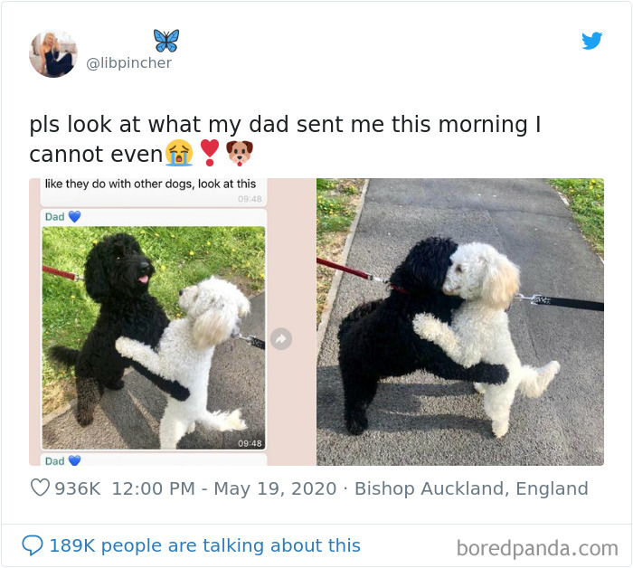 user shared photos that show the two sibling dogs happily hugging each other on the road
