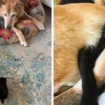 Doggo Takes Care Of Each And Every Cat In Cat Shelter And It's Too Pure