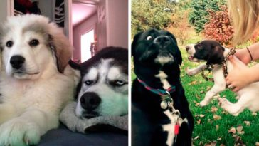 20+ Dogs Who Got A Younger Sibling And It Ruined Their Life