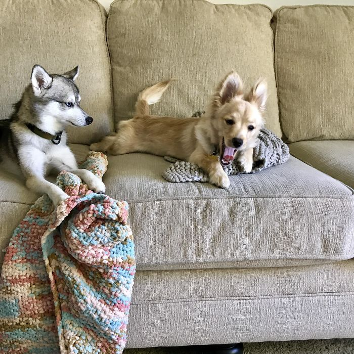 Why is this dog not amused to see new member in the home?