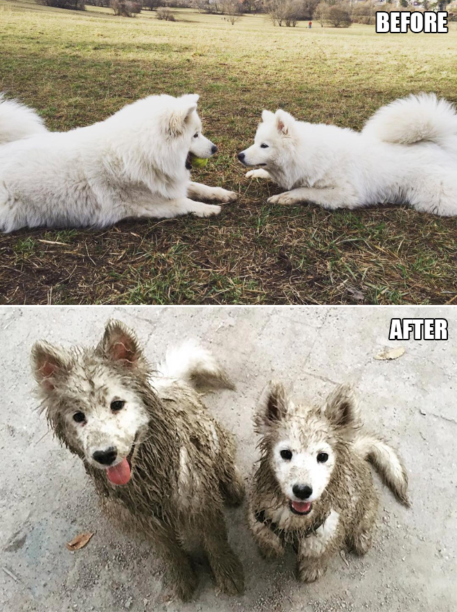 The two dogs play in the mud together
