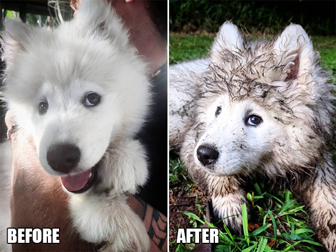 Cutest dogs who play in mud