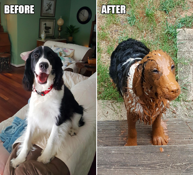 Dogs enjoy the most in the mud puddle