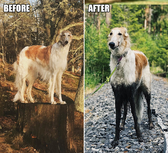 Dogs enjoy the mud all-alone