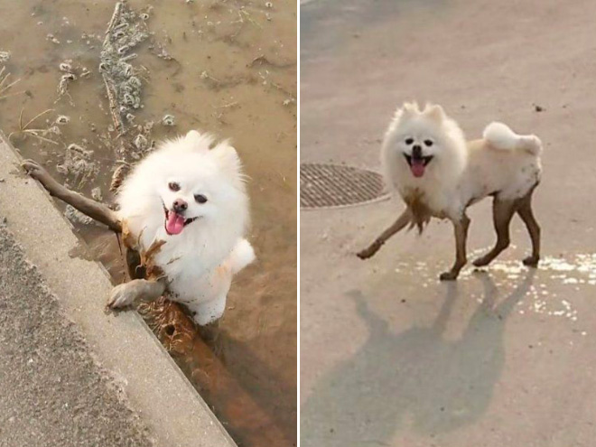 Dogs turn into model while enjoying in muddy river