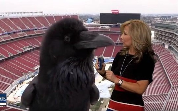 Interviewer talks to the giant crow? Wide-open your brain and eyes!