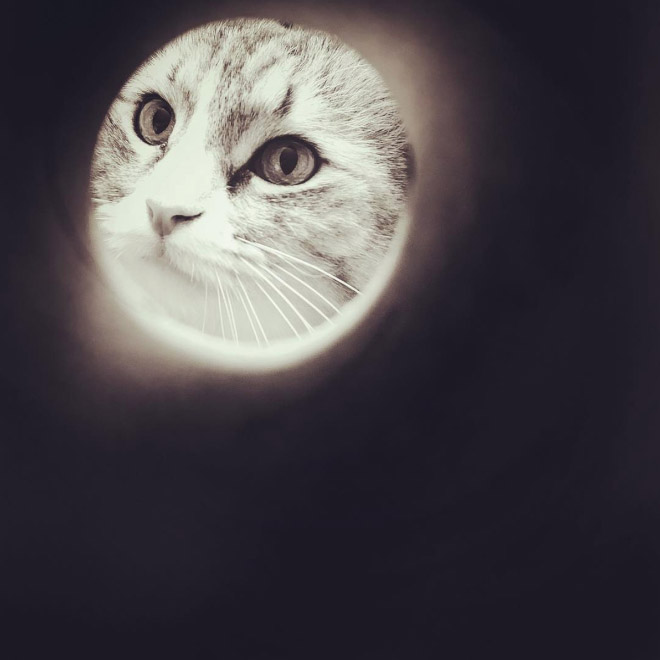 cute meow that resembles moon.