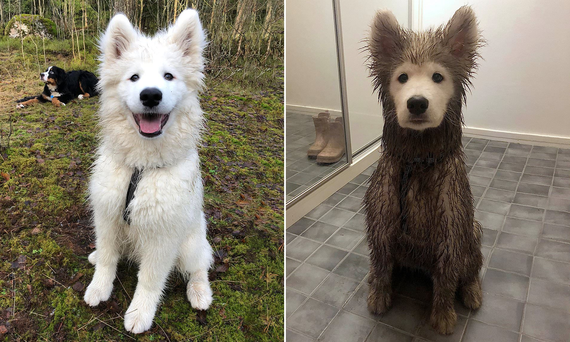 Before and after a playdate in mud