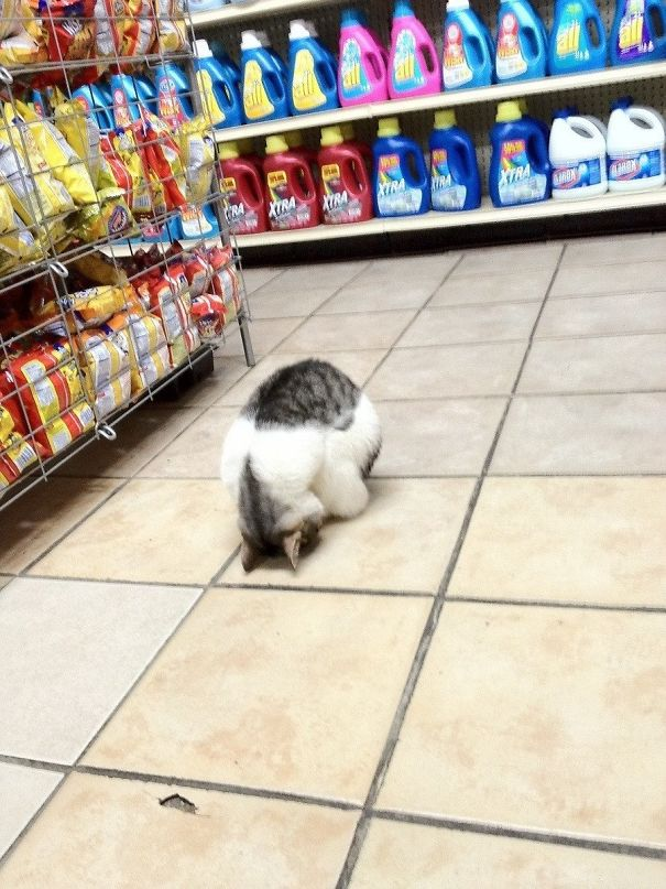 Why is this dude resting on the floor in a Bodega in NYC?