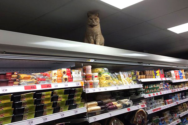 Funny incident at stores : What is this cute kitten doing up, there?