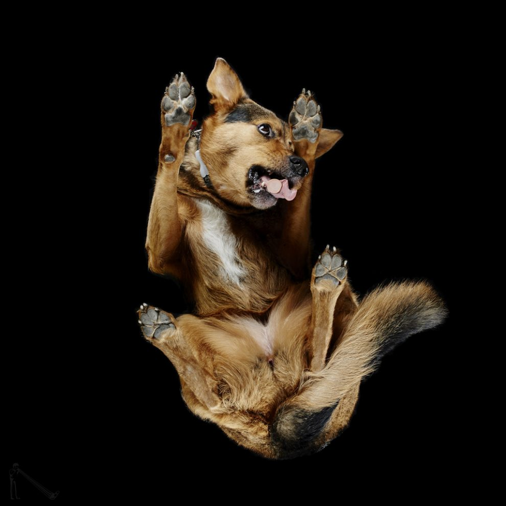 Photographer captures dogs from underneath
