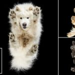 Photographer Cute Takes Pictures Of Dogs From Underneath
