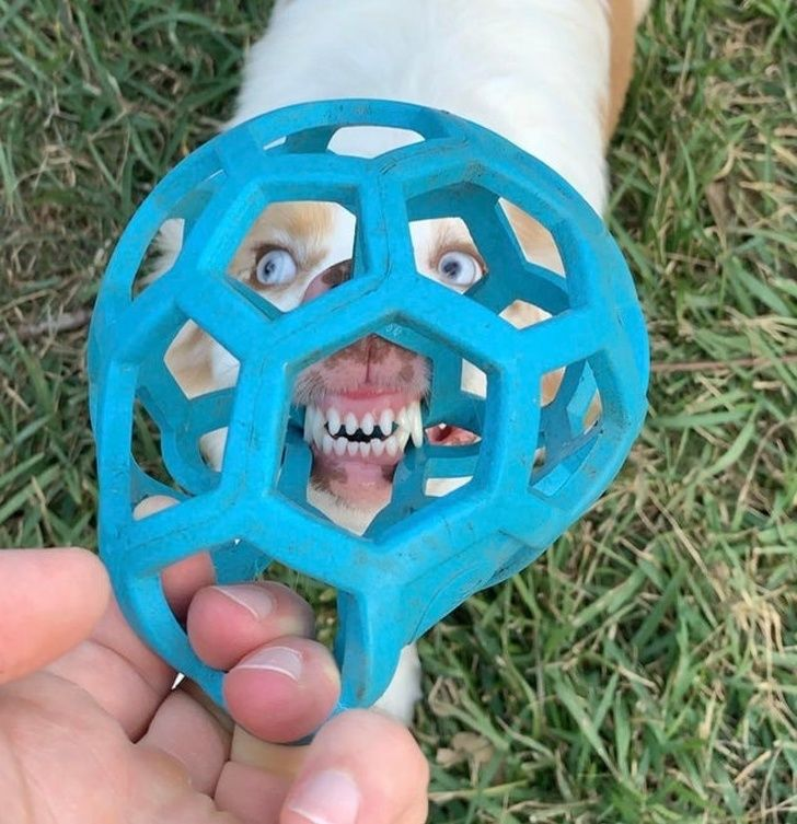 My dog's face through her favorite toy