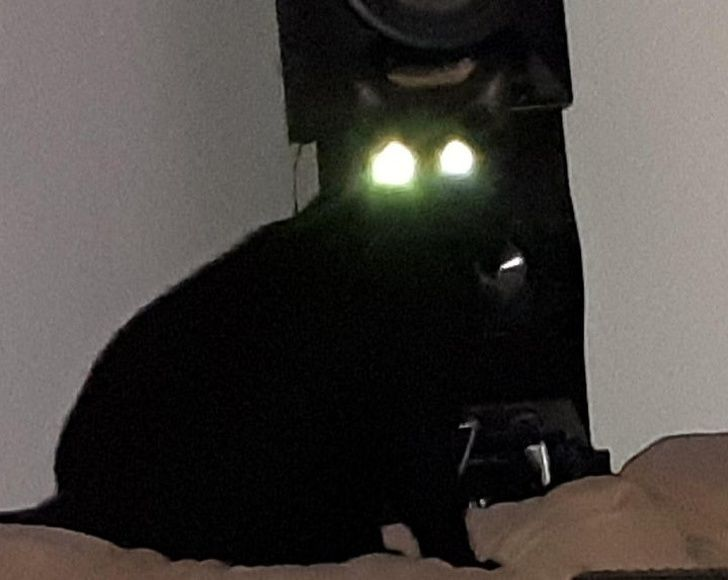 Someone please call the Exorcist! Oh, wait, that's my cat