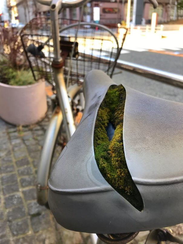 This Colony Of Moss Growing Inside A Bike Seat