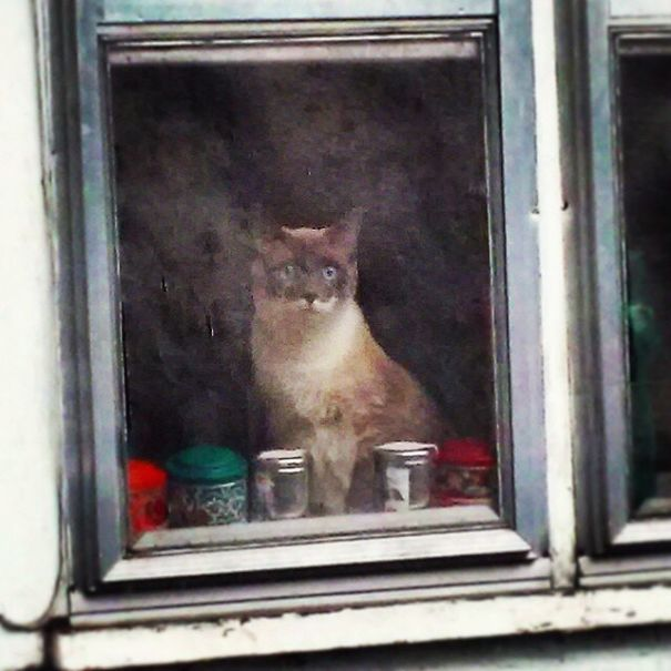My Friend Took A Picture Of Her Cat With A Crappy Cellphone Camera Through A Dirty Window Frame And It Looks Like A Painting