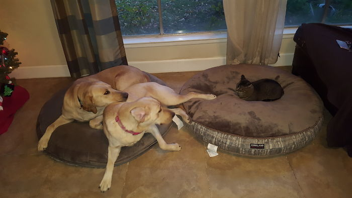 Got The Dogs New Beds. I Should Have Got Them Some Courage
