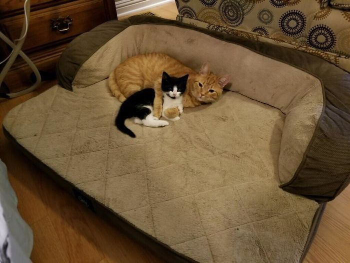 Well Was Looking For A Forever Home For This Stray Kitten But The Other Cat Has Spoken, The Dog Also Has No More Bed