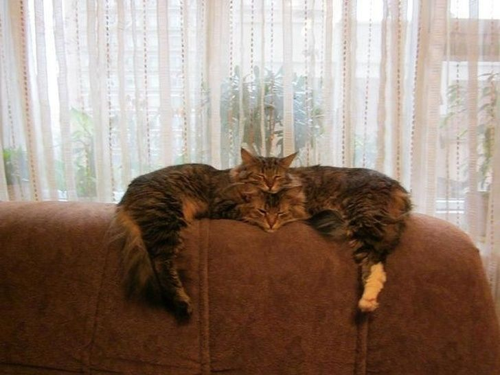 This is how 2 cats become one