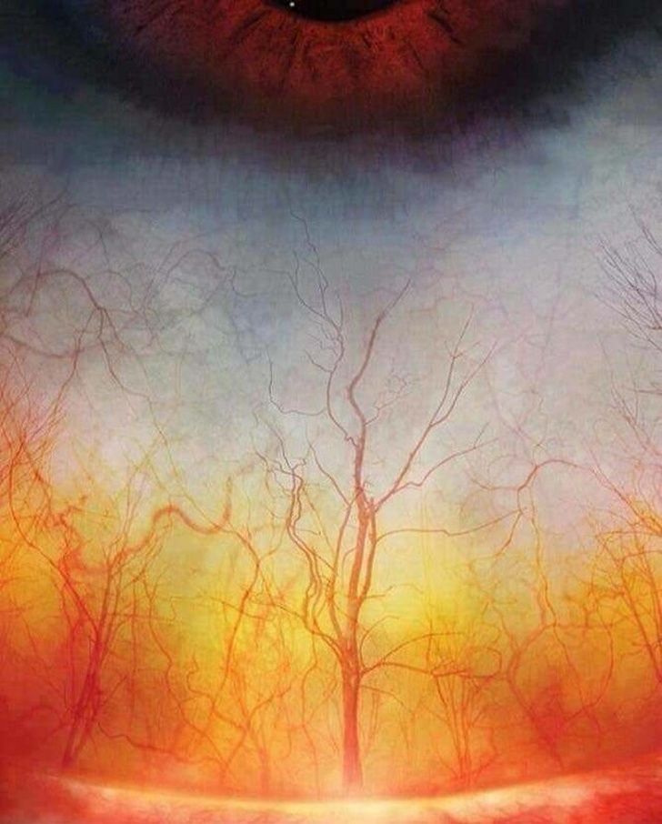 A high-definition photograph of blood vessels in a human eye looks like a creepy forest
