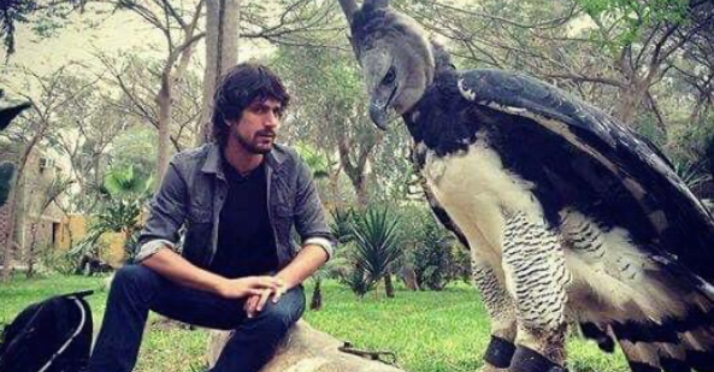 Harpy eagle featured image
