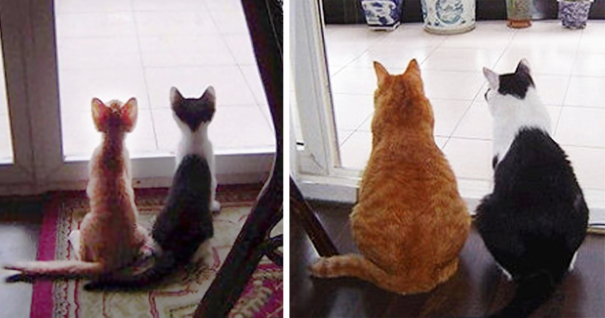 Cats growing up