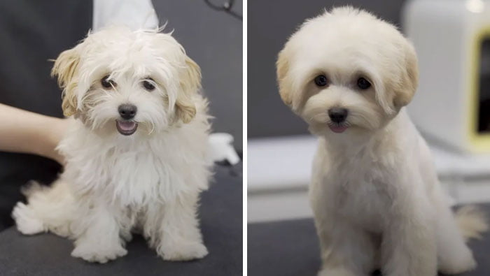 Pet Groomers 101 - This one looks like a very active puppy.