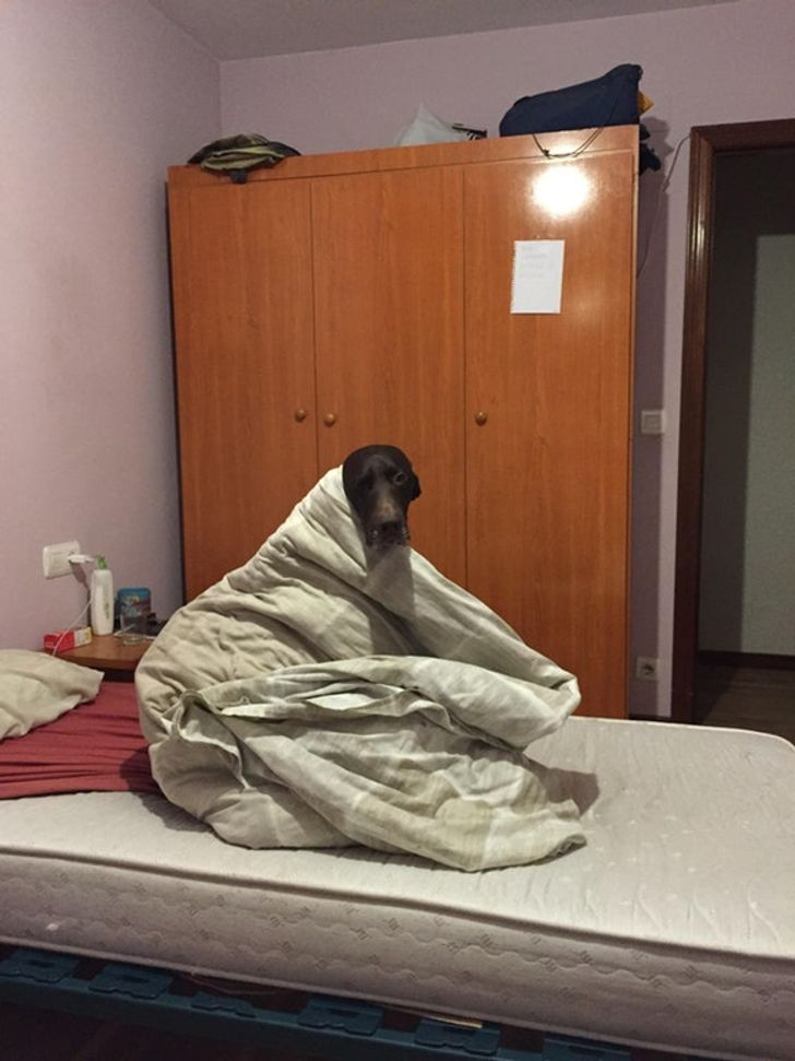 My dog hates winter, and I can't explain to her that it's not within my powers to switch off winter outside