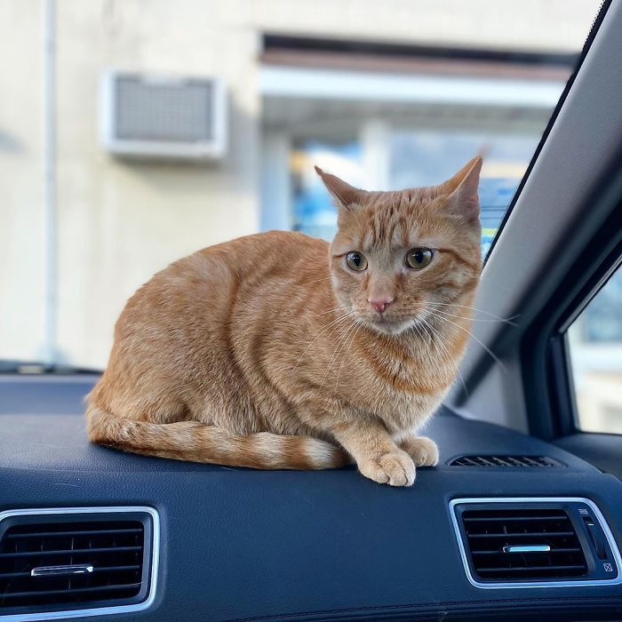 The cat's place in the car