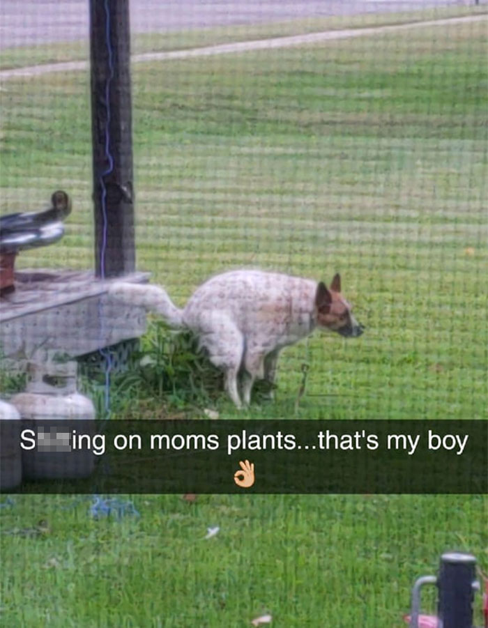And people started posting pics of their dogs being busy in similar scenarios
