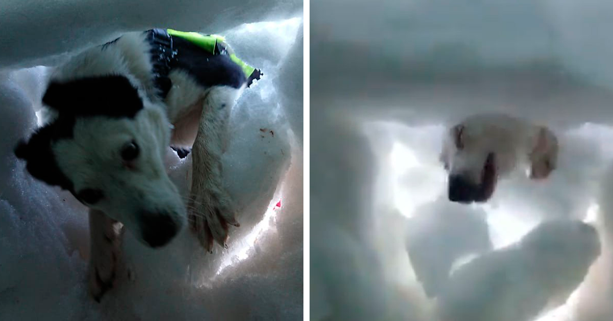 Man Buried In Snow Films A Rescue Dog Saving Him, And It's Beautiful