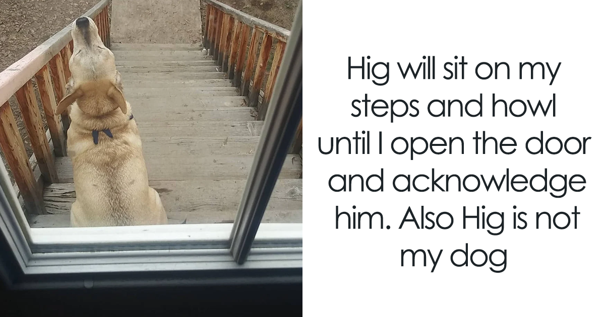 30 Funny And Cute Dog Snapchats That Will Hopefully Make Your Day