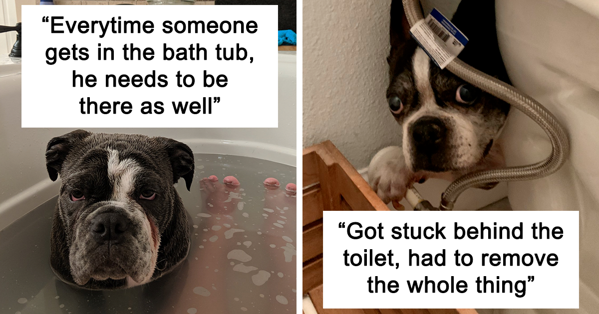 People Are Sharing Stories About The Dumbest Dogs They've Ever Known In This Viral Thread