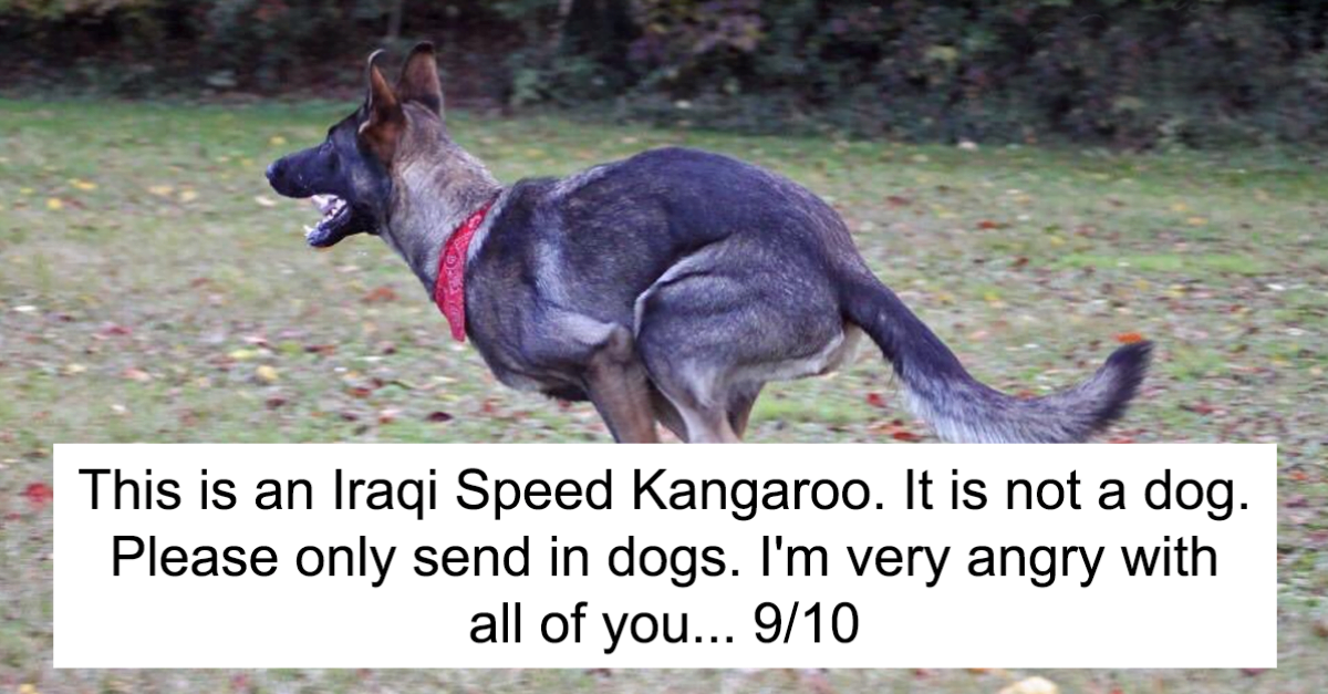 40 Times People Failed To Send Dogs To 'We Rate Dogs' & Sent Something Else