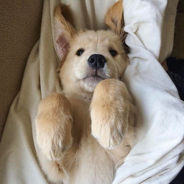 He is ready to take a nap.