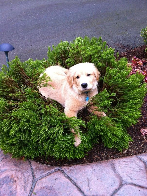 I don't care about the ruined bushes. He's happy that's all I want!