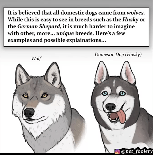 Confusing dog breed