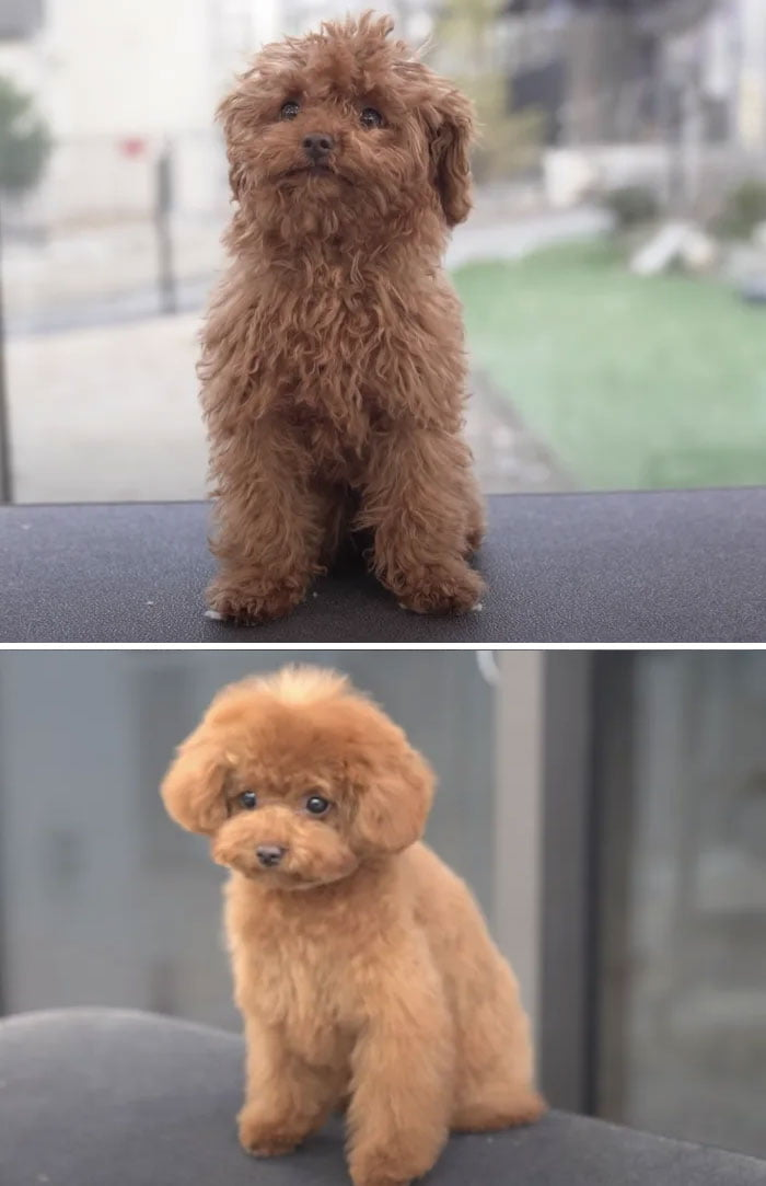 Pet Groomers 101 - Did he just turn back into a puppy?