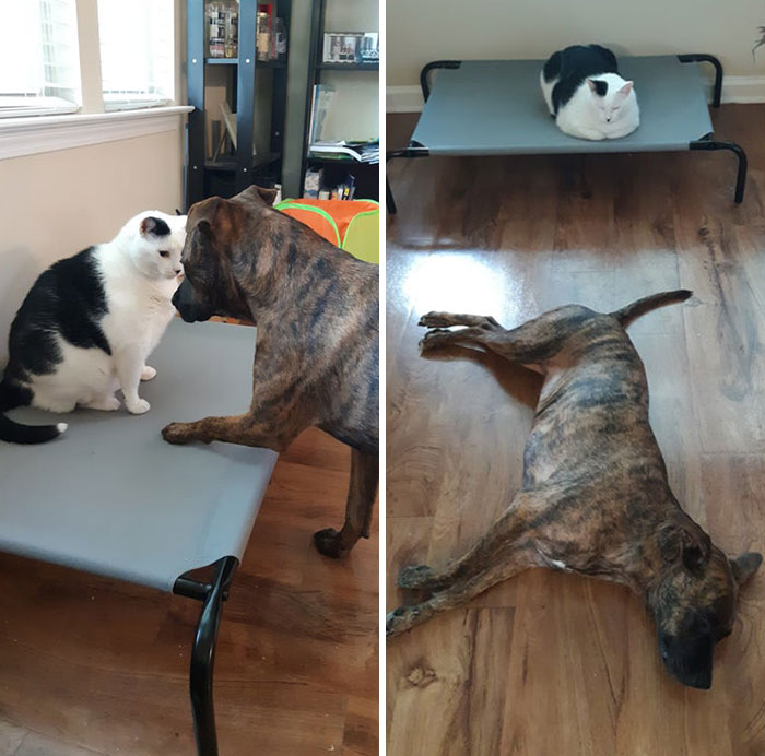 Poor Pup Tried To Ask Nicely. Too Bad The Cat's A Jerk