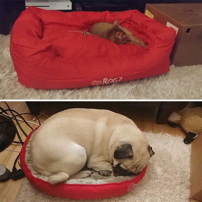 Cat And Dog Enjoying The New Beds We Just Got Them
