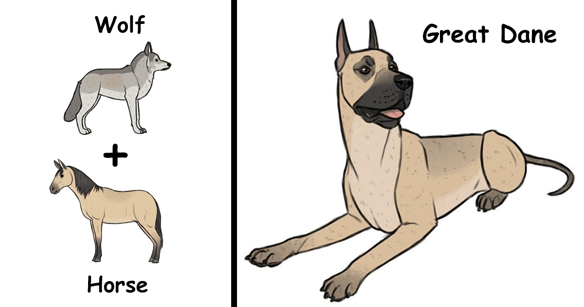 Artist Imagines The Origins Of Unique Dog Breeds & Results Are Too Hilarious