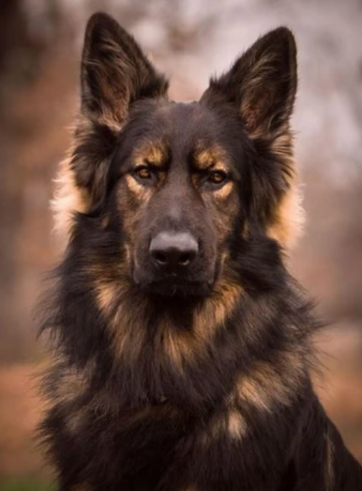 This looks like a devoted dog!