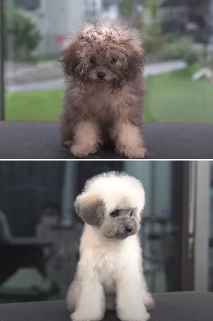 How did his fur change color as well?