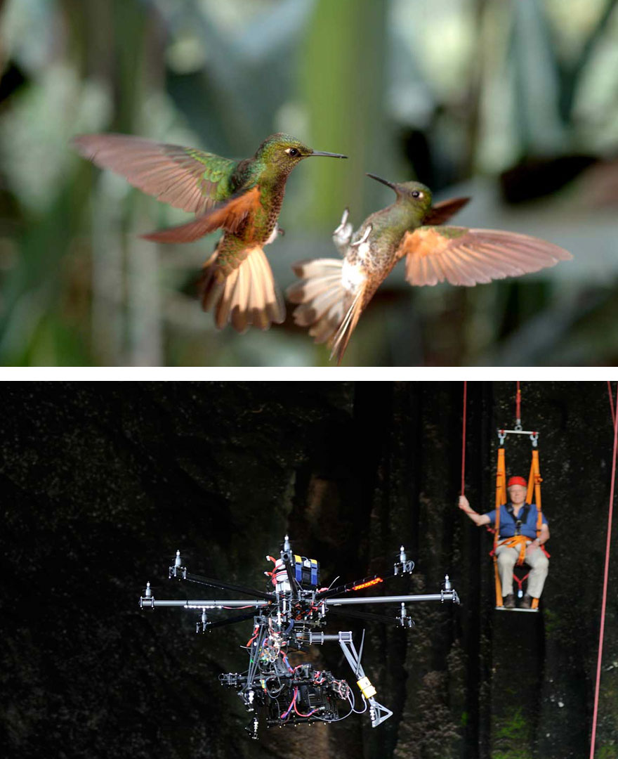 Capturing The Hummingbirds With 3D Camera