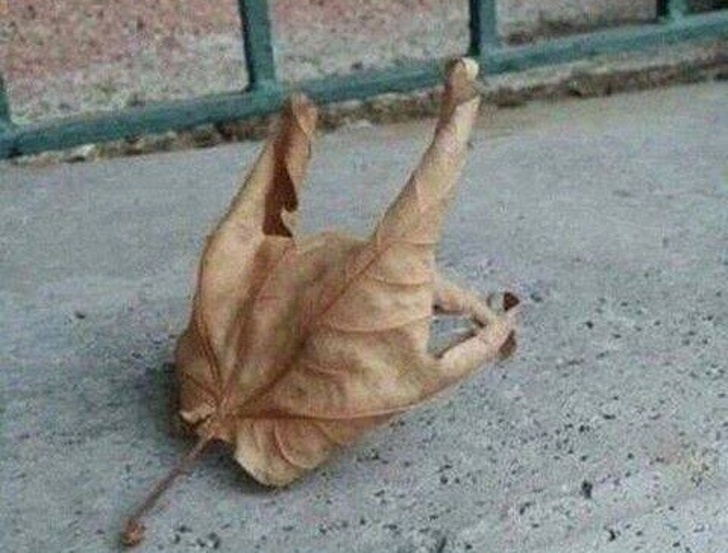 Illusion pictures:A Roast Chicken, a metallic hand or a dried leaf- What is it?