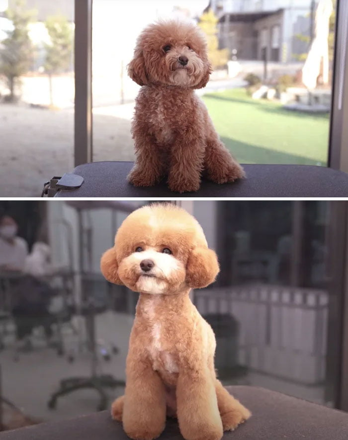 Pet Groomers 101 - I see that leg warmers are coming back.