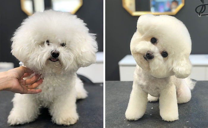 Pet Groomers 101 - The head tilt is truly adorable.