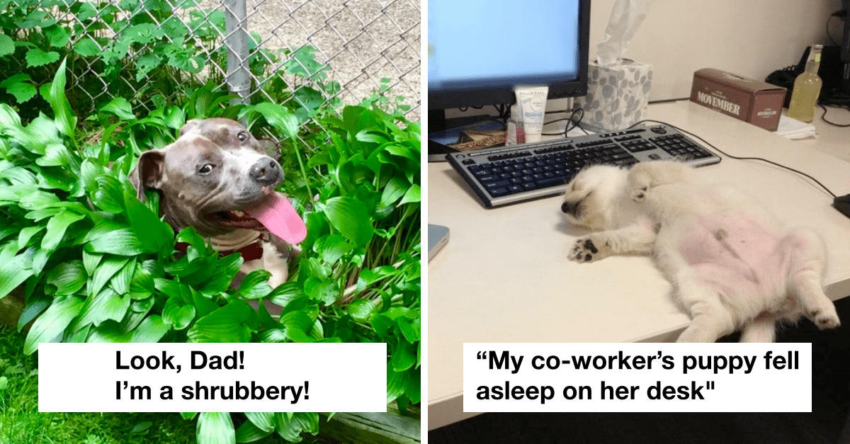 20 Wholesome Dog Posts That Work Better Than Antidepressants